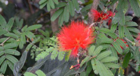 Blume mit Grün. Foto: Landkreis Regen