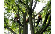 Kletterausrüstung Baumpflege : Mit kletterausrüstung wurde im naturschutzgebiet moosbacher pfahl