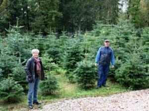 Landrätin Rita Röhrl machte sich ein Bild vor Ort und besuchte Christian Achatz in der Christbaumplantage. Foto: Langer/Landkreis Regen