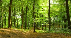 Waldweg im Sommer. Foto: AdobeStock- Inga-Nielsen