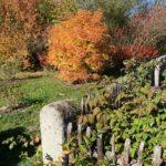 Apfelbeere und Pimpernuss mit intensiver Herbstfärbung