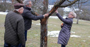 Landrätin Rita Röhrl, Fachberater Klaus Eder und Michael Fremuth entdeckten den Schaden. Foto: Langer/Landkreis Regen