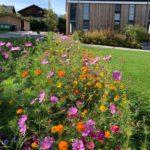 Blumenbläte auf Blühstreifen an der Hotelberufsschule Viechtach