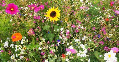 Blumenwiese am Parklatz des Landratsamtes Regen. Foto: Landkreis Regen, Langer