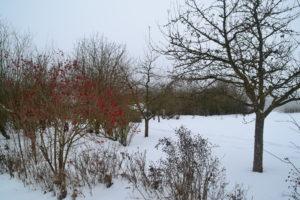 Im Kreislehrgarten liegt Schnee, auch die Arbeit der Gartenbauverein ruht momentan. Foto: Eder/Landkreis Regen