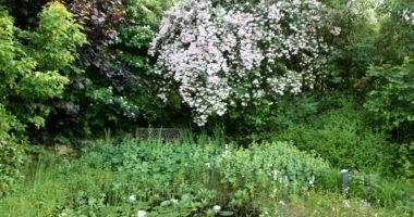 Auf schmalen Rasenwegen führt Verena Quappig durch den sonnigen Gartenbereich mit vielfältiger Bepflanzung. Foto: Langer/Landkreis Regen