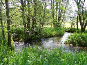So soll sich der Wolfertrsieder Bach zukünftig auf ganzer Länge durch die Wiesen des Achslacher Tales schlängeln. Foto: Landratsamt Regen