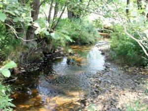 Am Wolfertsrieder Bach hat sich viel getan, hier soll die Flussperlmuschel weiter eine Heimat haben. Foto: Langer/Landkreis Regen