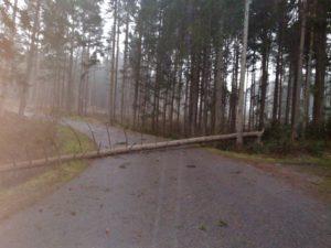 Baum über Straße, das wurde am Montag, 10. Februar, mehr als 100 Mal gemeldet. Foto: Langer/Landkreis Regen