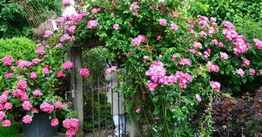 Der Juni zeigt die Rosen von seiner schönsten Seite. Aber auch attraktive Staudenbeete und viele andere Gestaltungsdetails gibt es in den unterschiedlichsten Gärten zu bestaunen