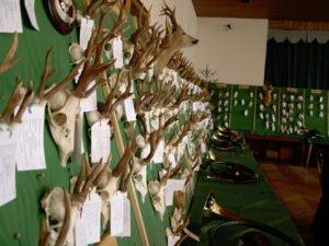 Bei der Hegeschau werden die Jagdtrophäen ausgestellt. Foto: Archiv Langer/Landkreis Regen