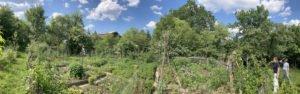 Gisela Pöhnl führt durch den üppig bepflanzten Gemüse- und Erdbeergarten. Foto: Langer/Landkreis Regen