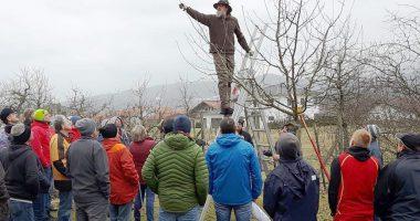 Unser Bild zeigt Klaus Eder beim Beschneiden des Baumes. Foto: Kronschnabl