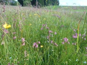 Artenreiche, vielfältige Wiesen sind auch für das Landschaftsbild wertvoll. Foto: Rosmarie Wagenstaller/Landratsamt Regen