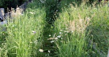 Durch die Blumenwiese von Linda Langer führt ein kleiner Weg, so kann man die Artenvielfalt bei Pflanzen und Insekten auch aus der Nähe beobachten. Foto: Langer/Landkreis Regen